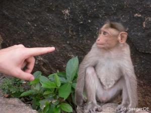 Planet der Affen: Vollkontakt hergestellt.