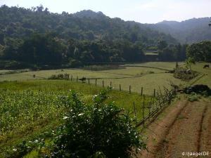 reislos aber nicht reizlos: Reisfelder in der Gegend