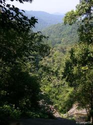 Blick in den Urwald vom Wasserfall aus