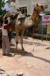 der indische MultiCar