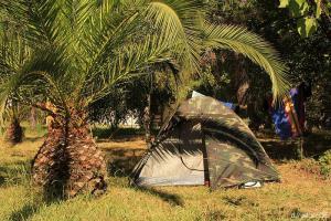 Zeltplatz Olmello: unser Stealth-Tent mit Privat-Palme