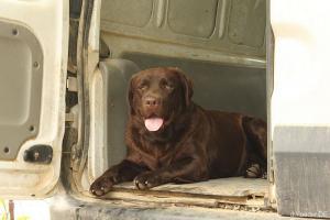 The Dog - Inselhund mit eigener Nische; faszinierend