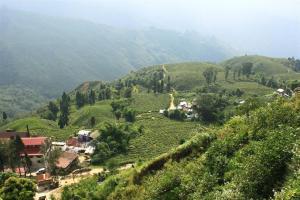 Leaflife. Teeplantagen soweit der Gaumen reicht.