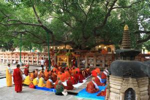 Barfuss unterm Bodhi - Der Ein-Baum-Wald