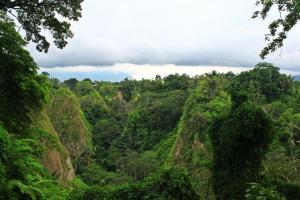 Feuchteinflößend. Original Regenwald