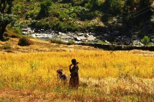 Nepali Bäuerinnen bei der Landarbeit
