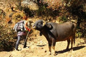 Auf Du und Du mit der Kuh