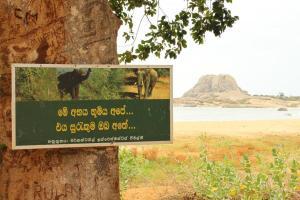 Yala Nationalpark. Expedition mit Gurtpflicht.