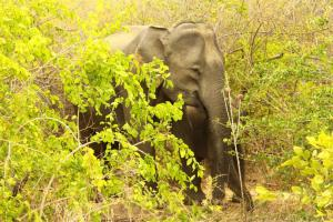 Den richtigen Rüssel gehabt. Elefant samt Infant. Großartig.