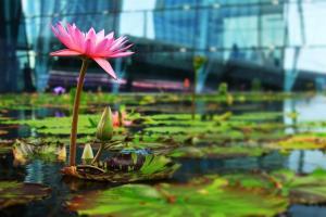 rosig: Gebäude-Teich am Expo-Gelände