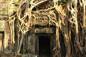 Ta Phrom - der versunkene Tempel