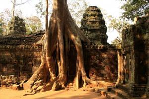 Ta Phrom - Baum und Mauer
